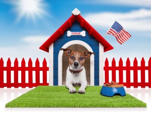 home-pic-doghouse